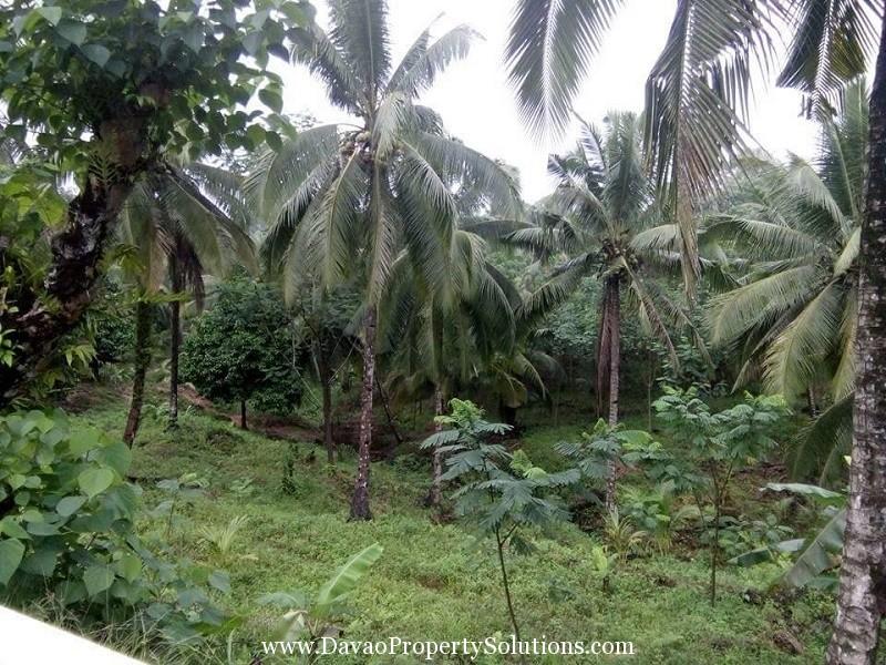 10 Hectares FARM LOT FOR SALE @ Trento Agusan Del Sur
