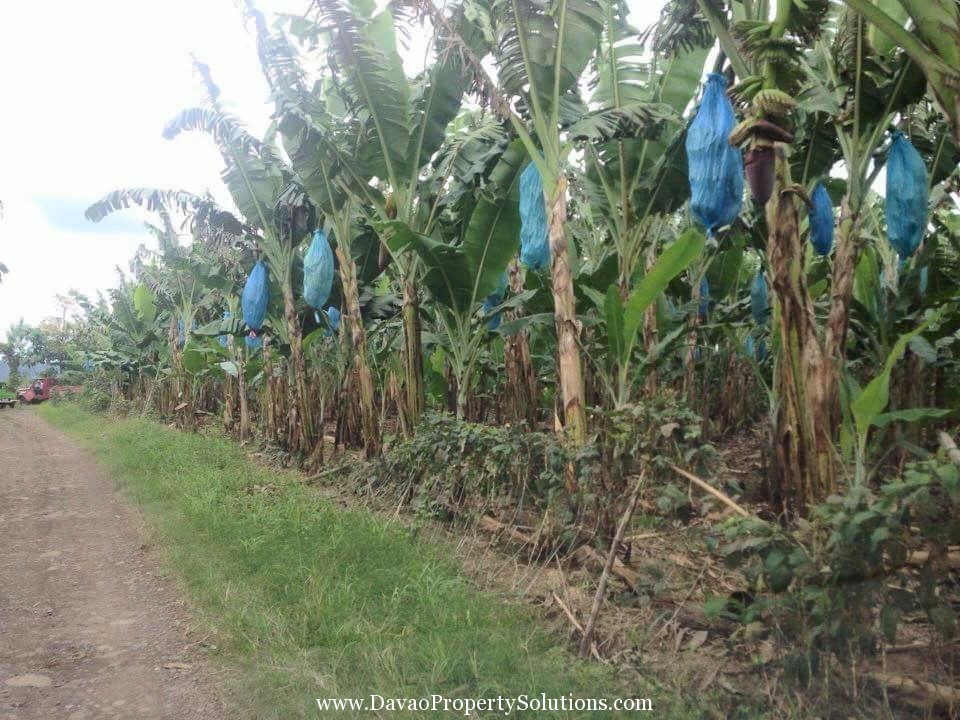1Hectare FarmLot for Sale in Tugbok Davao City