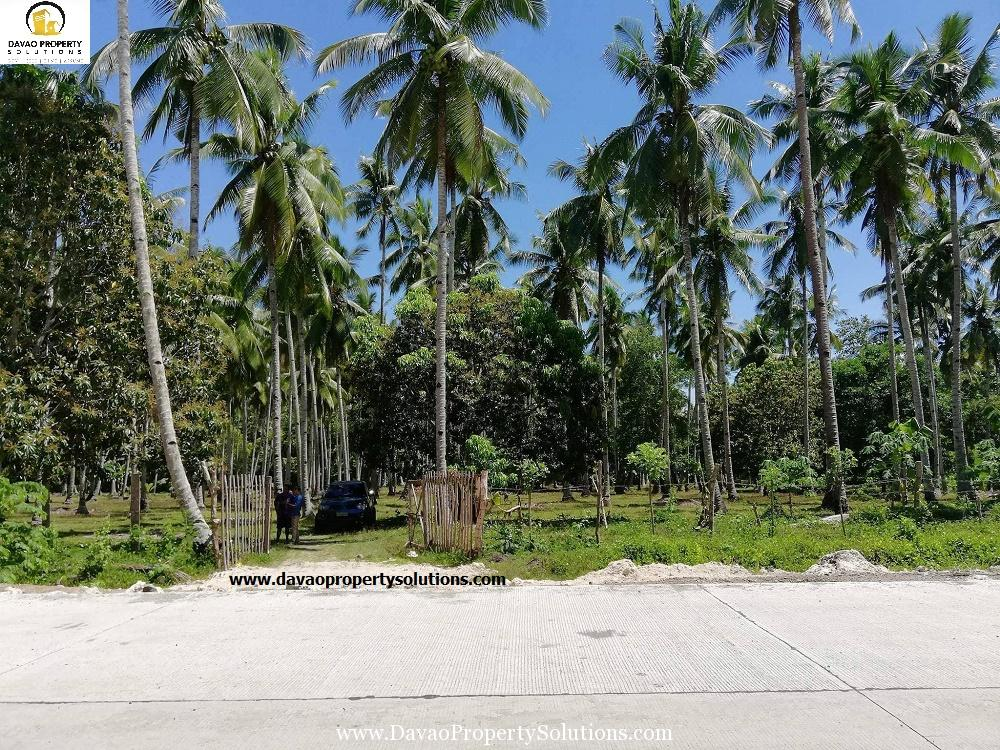Lot for Sale in Samal located at Babak