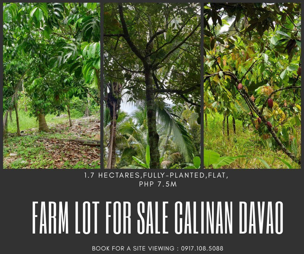 Fully Planted #FarmLot for Sale in Wangan Calinan Davao City...