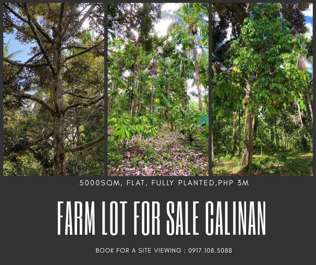 Farm Lot For Sale  Calinan Davao City  Fully Planted  Lot Ar...