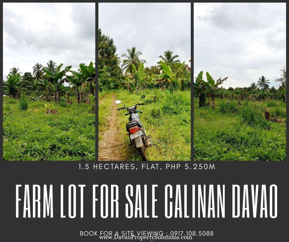 Fully Planted 1.5hectares Farm Lot for Sale Davao City