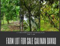 1.7 Hectares Fully Planted Farm Lot for Sale Calinan Davao City