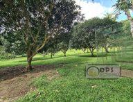 30,000 Square Meters Farm Land along the road + Overlooking to Talikud Samal Island